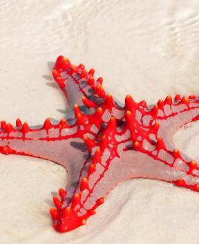 Zvezdice Zanzibarja s Tur Tur Turizem