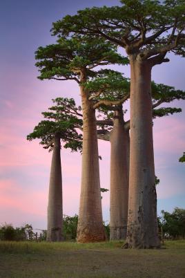Čudovita narava Madagaskarja; Tur Tur Turizem