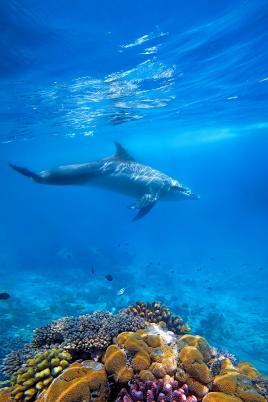 Lep podvodni svet s Tur Tur Turizem