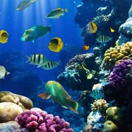 Barviti koralni grebeni Rdečega morja